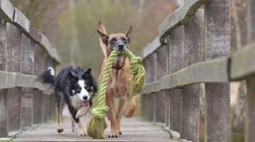 Doggy Toys