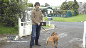 Leash Training Video
