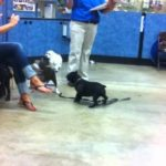 Petsmart Dog Training Class